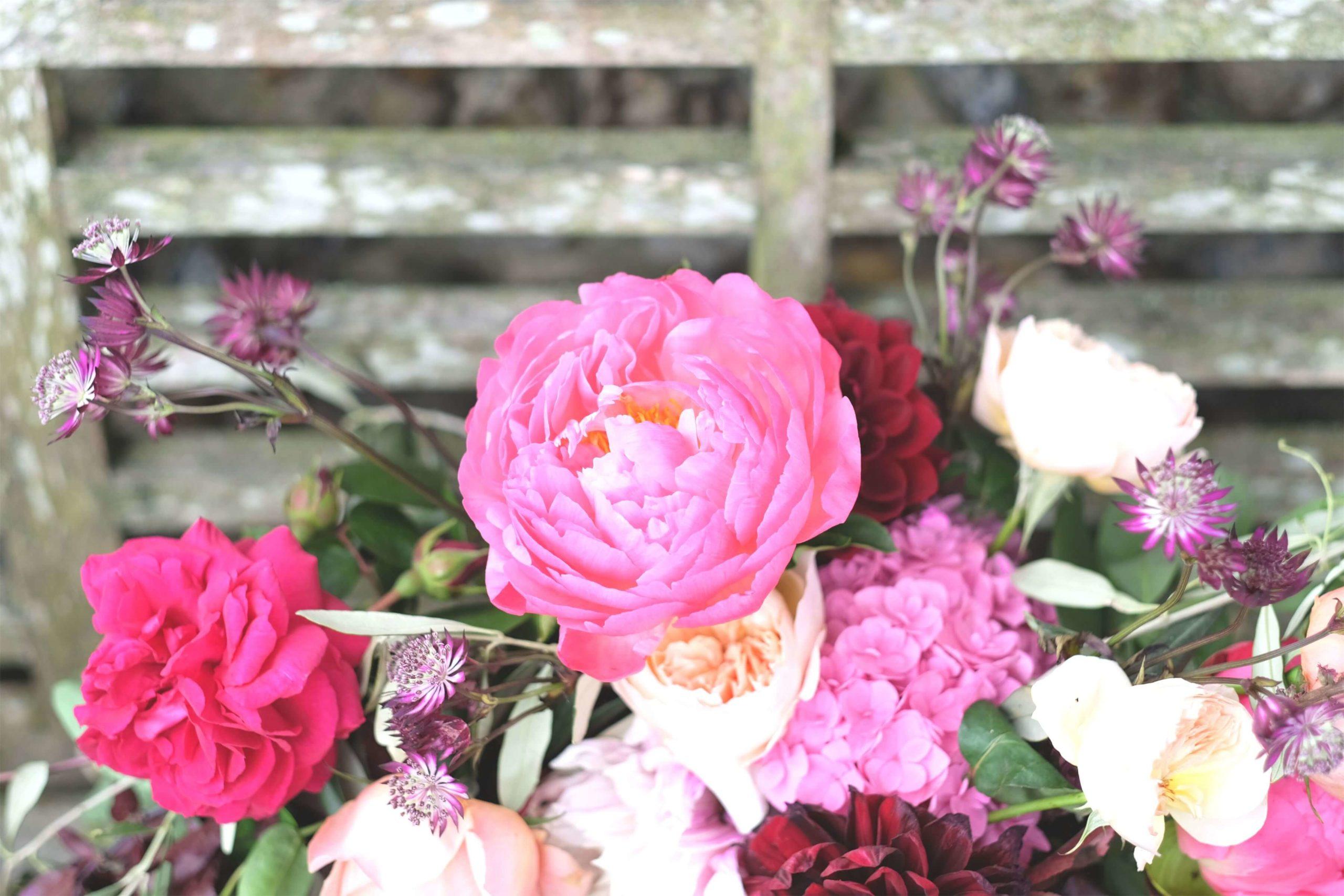 Rose, Claret & Blackberries 23
