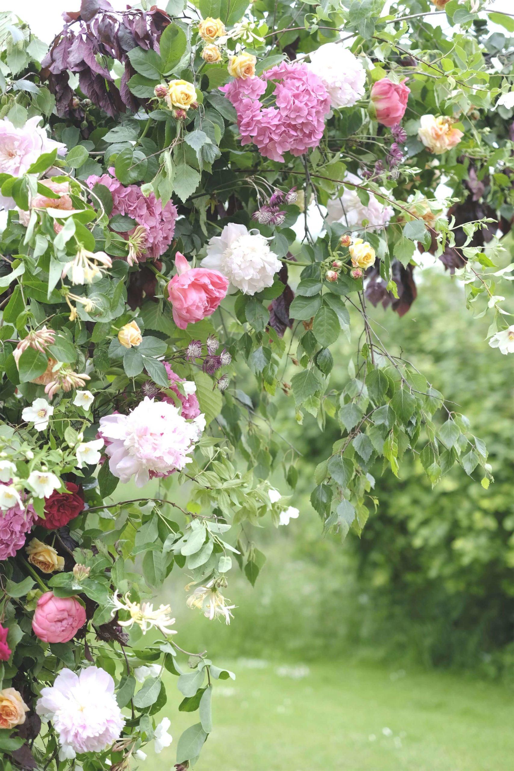 Rose, Claret & Blackberries 14