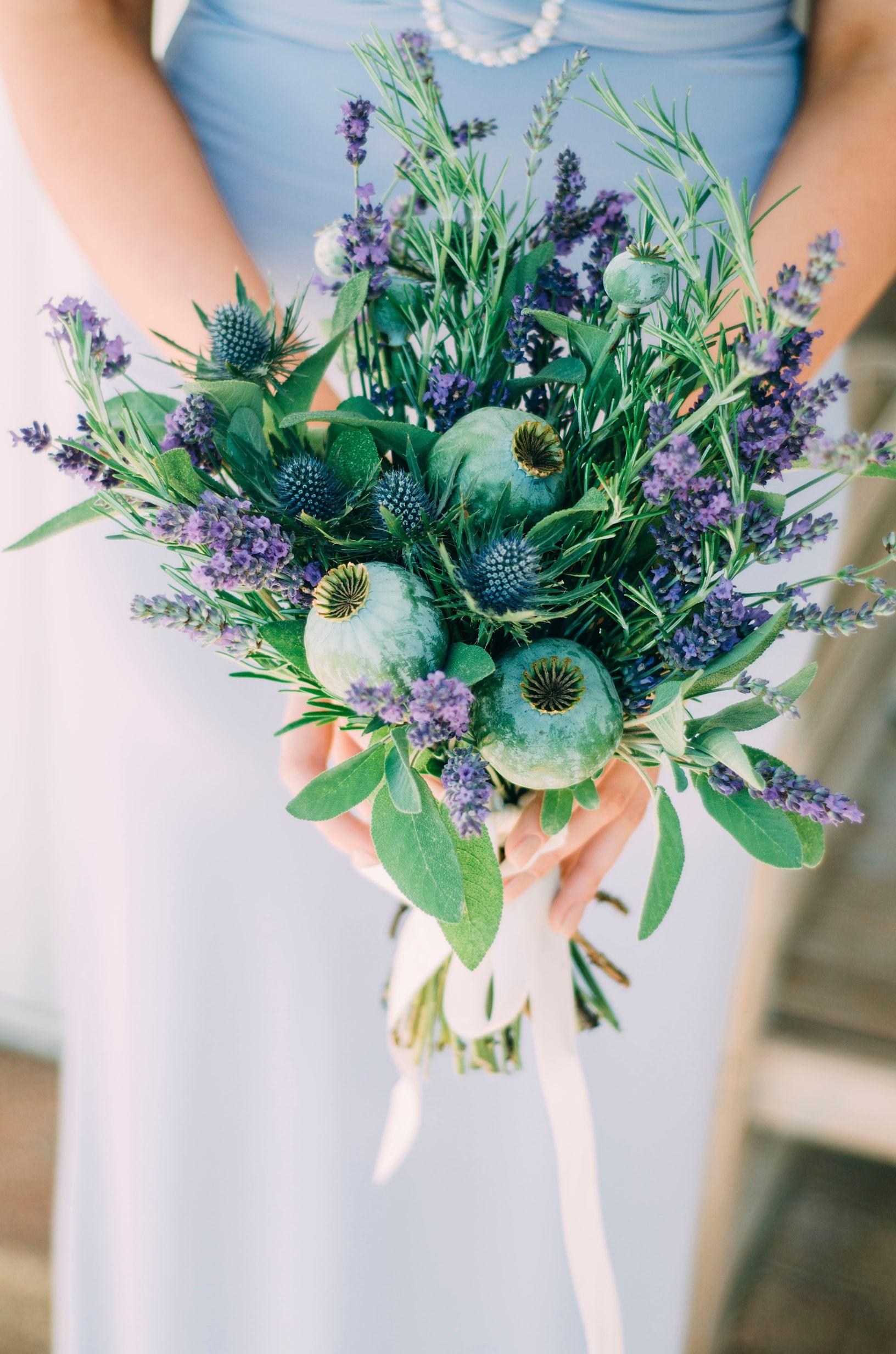 Lavender Provence 25